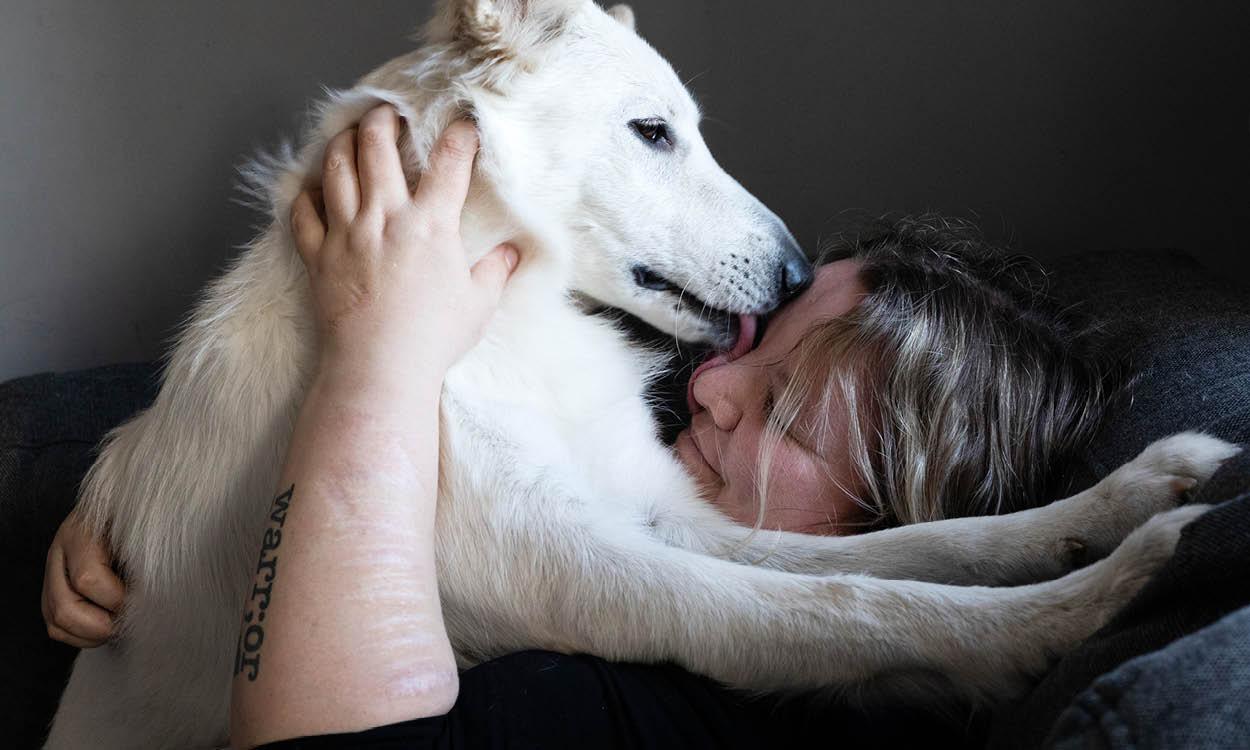 Hond Nova