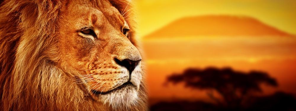 shutterstock 180605561 De trailer van de Disney remake The Lion King is uit en wij houden ervan!