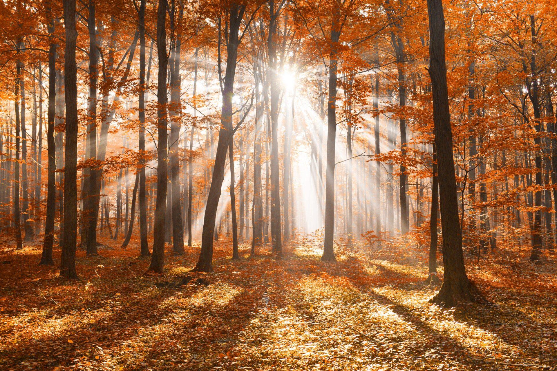 shutterstock 572366701 scaled Zo krijg jij energie van de zon, ook in de herfst!