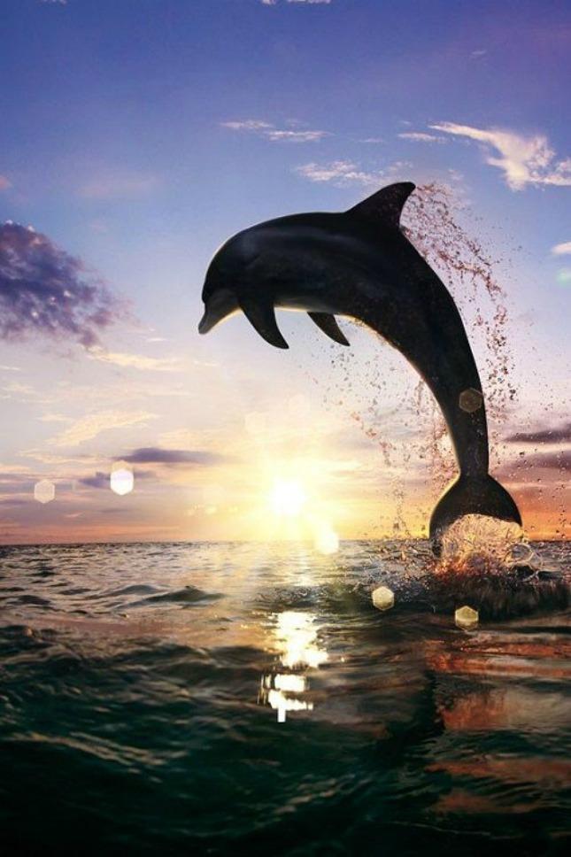 18 dolfijnen in de zee #geluksmoment