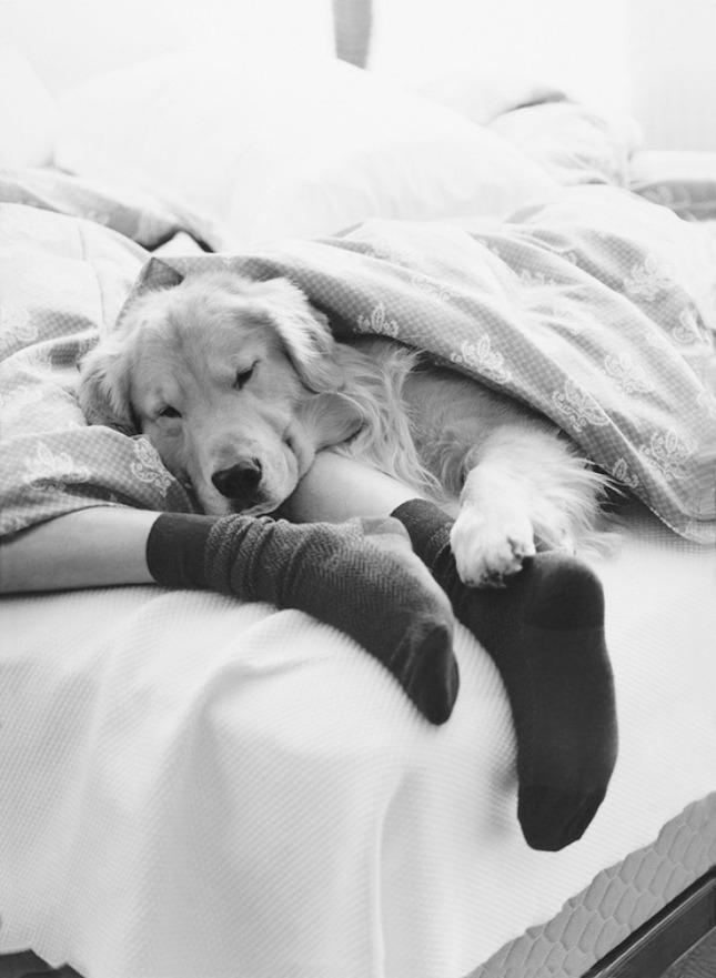 20 hond kat nestelt zich tegen je aan #geluksmoment
