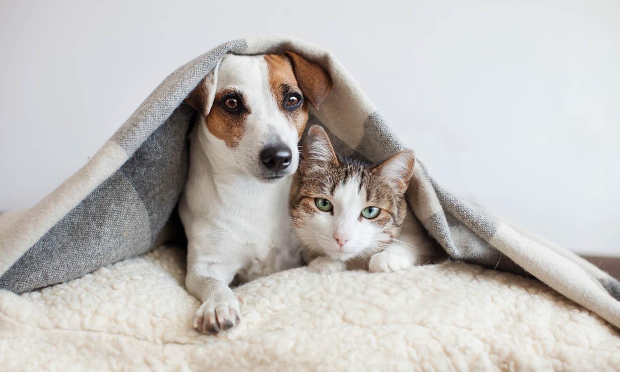 dieren gezondheid