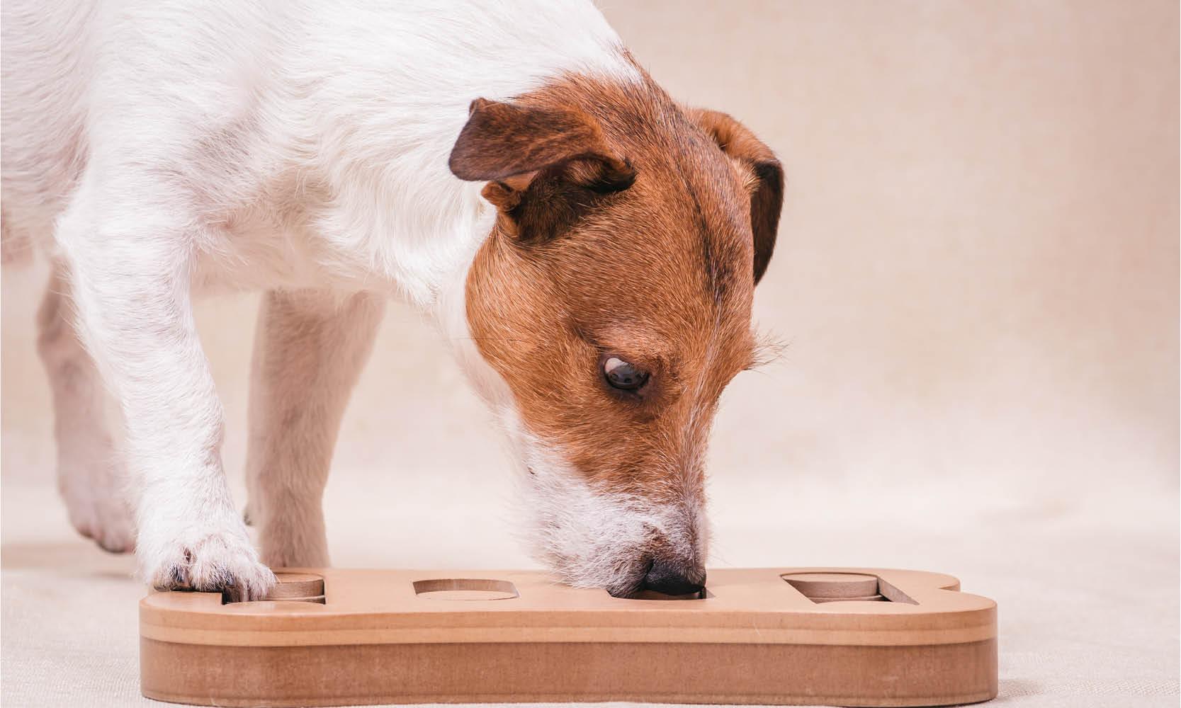 denkspelletjes hond