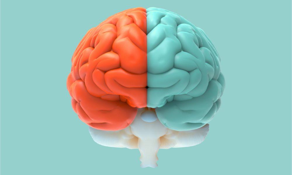 verschil waarheid en fantasie van de hersenen